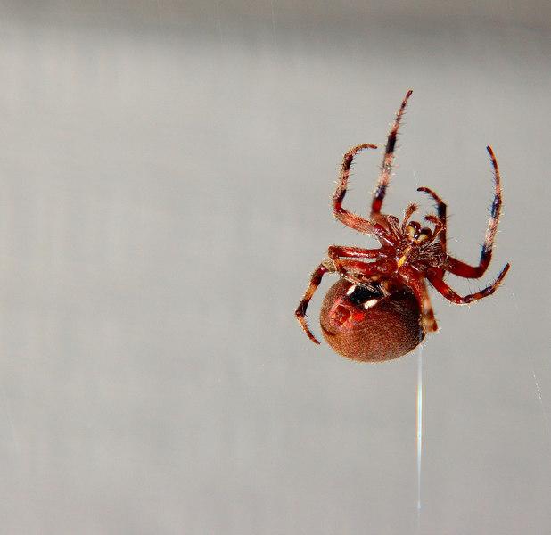 spider06.jpg
