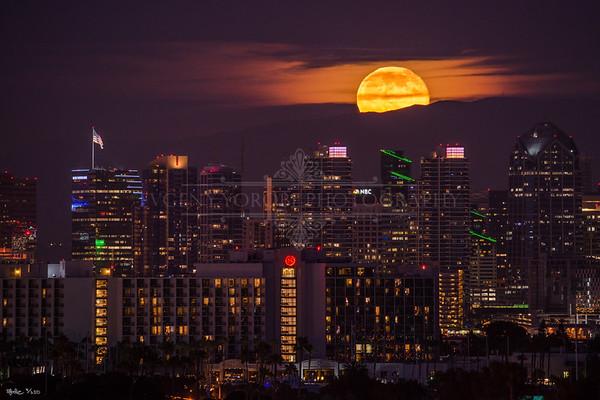 Downtown San Diego & Skyline