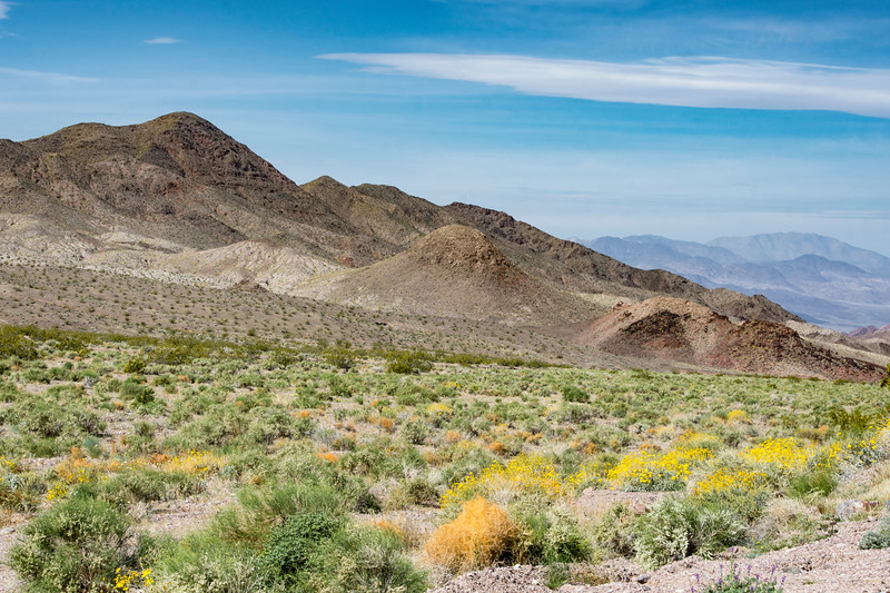Death-Valley-south-entrance-flowers-spring-2017.jpg