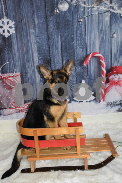 Lexie's First Christmas Pics