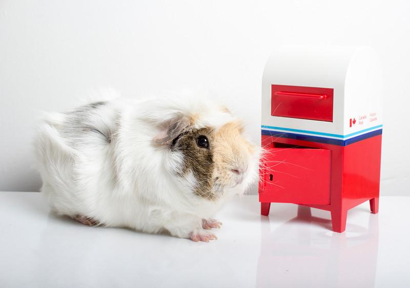 The Piggy Post