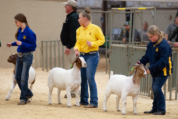 NW District Goat Show