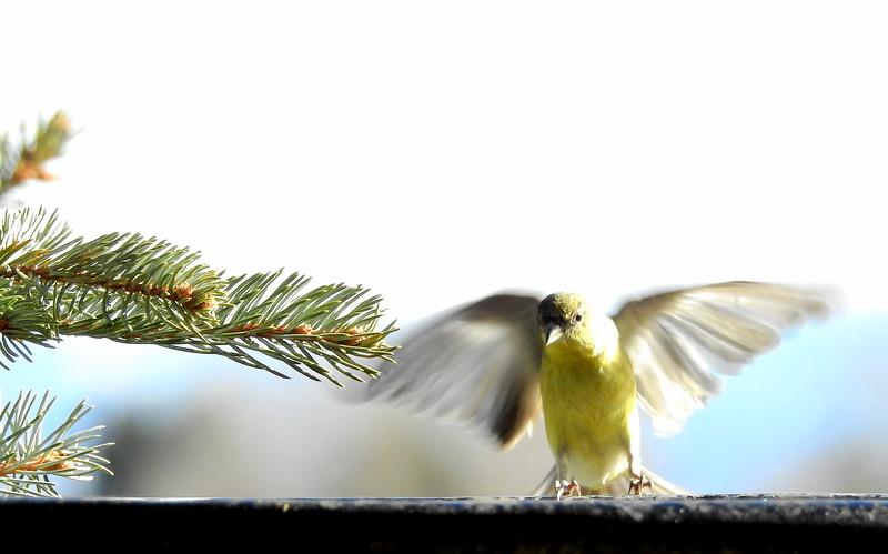 birds (209).JPG