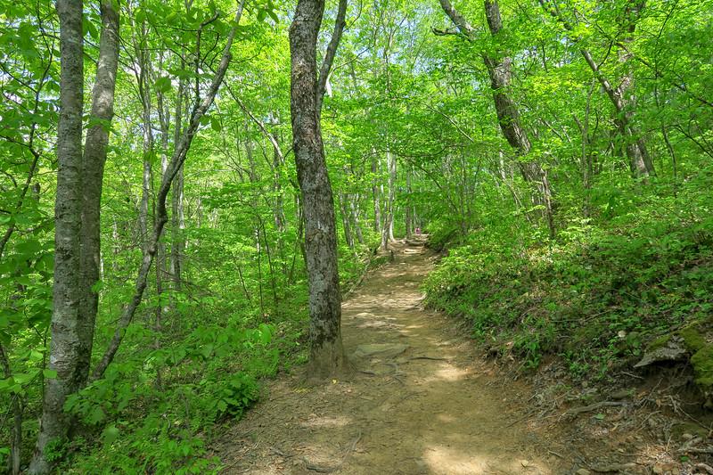 Mountains-to-Sea Trail -- 4,460'