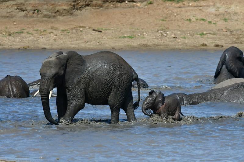 Elephants101.jpg