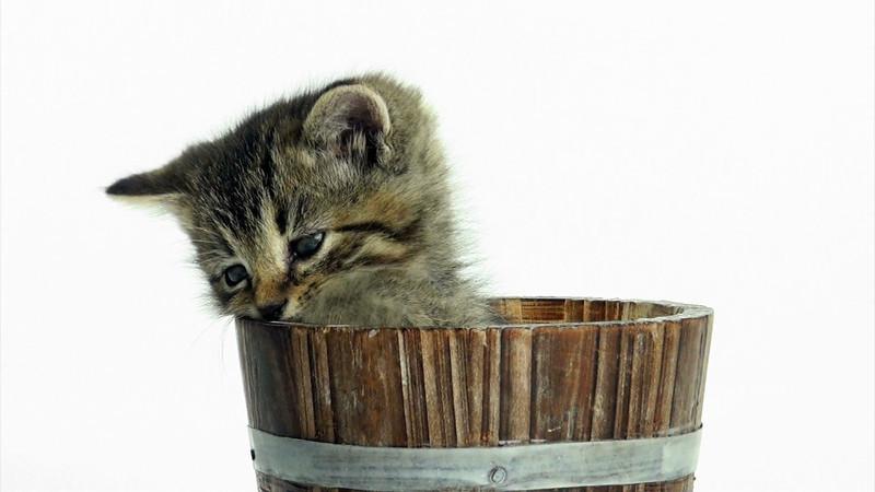 Kittens_tabby_011.mov