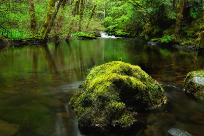 Gifford Pinchot forest jpg.jpg