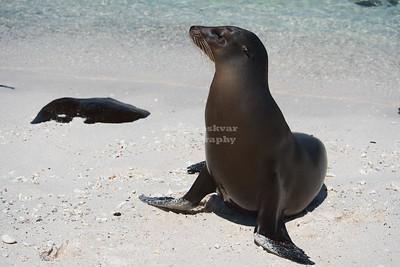 Ecuador - Galapagos - Mosquera Island