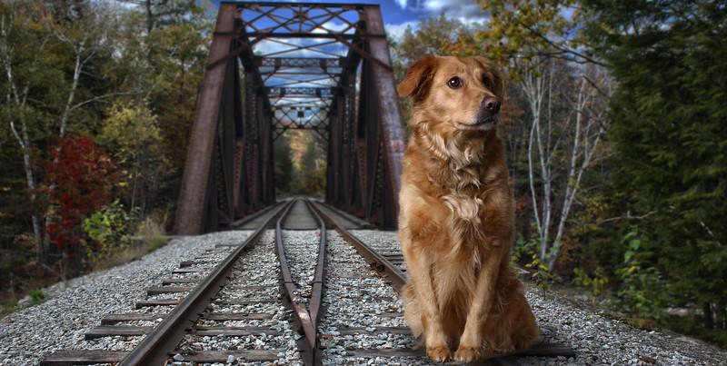 Dog-traintrack.jpg