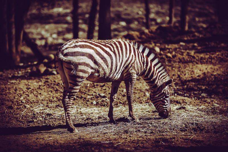 SafariWest2017-50.jpg