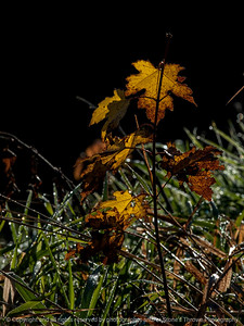 015-leaf_autumn-wdsm-25oct14-09x12-001-0313