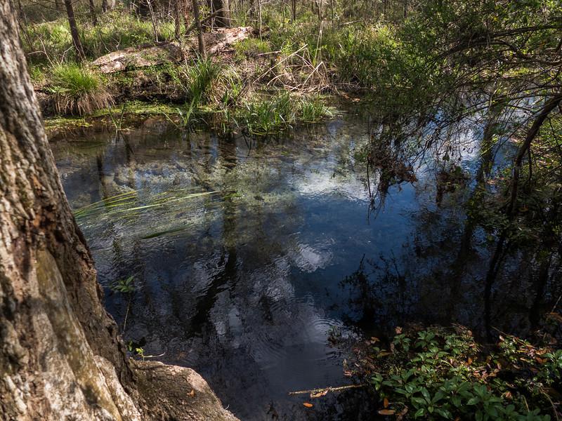 02-21--2019 Ichetucknee Springs (15 of 23).jpg