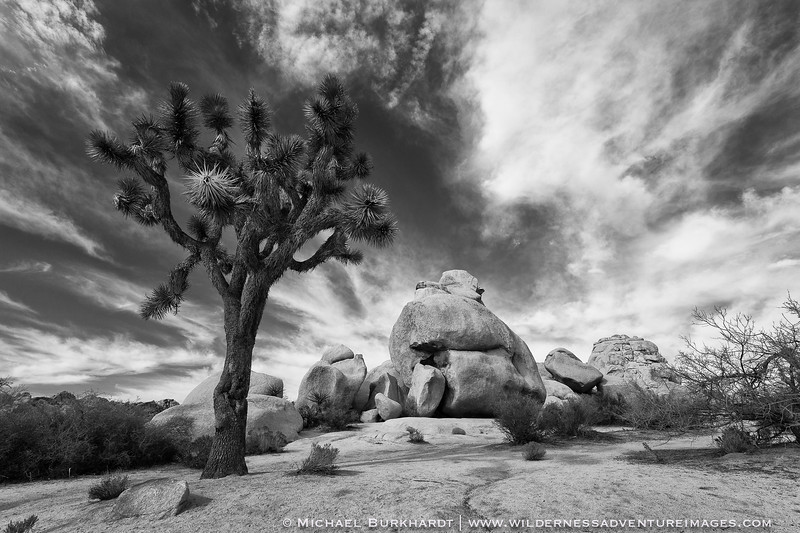 Joshua_Tree_National_Park_Hidden_Valley_Black_and_White_197.jpg
