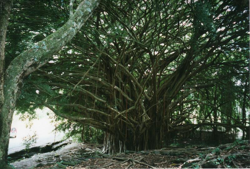 199806-hawaii-10248.jpg