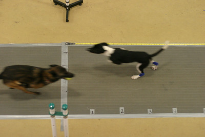 Flyball MAINEia 2010