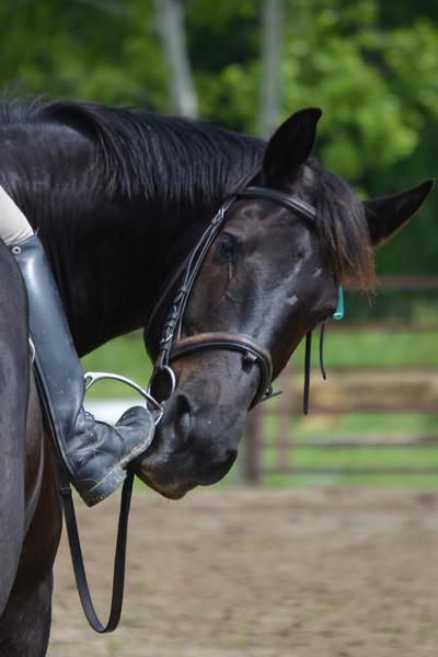 Friday's Equestrian Album