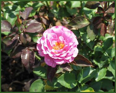 2003-08-13,15 Boerner Gardens Favorites