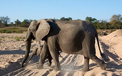 Safari 2014