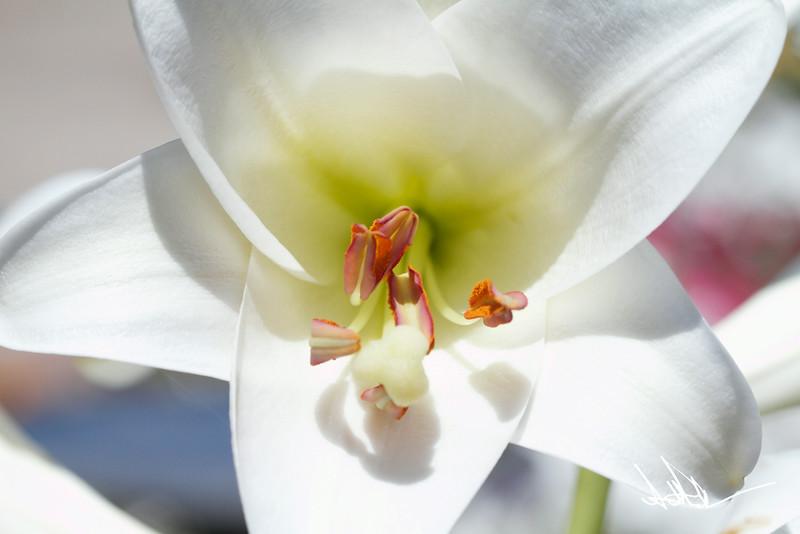 Flowers-11-2.jpg