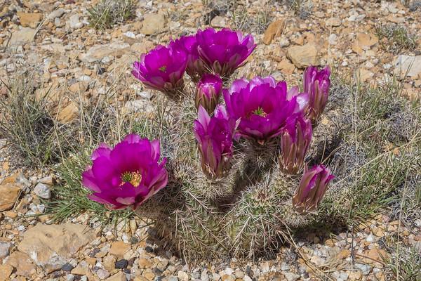 America, Spring, 2017, Desert, Utah-Nevada-California-Nevada-Arizona-Utah-Colorado