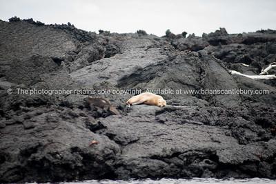 Galapagos Islands.