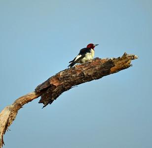 Dauphin Island various birds