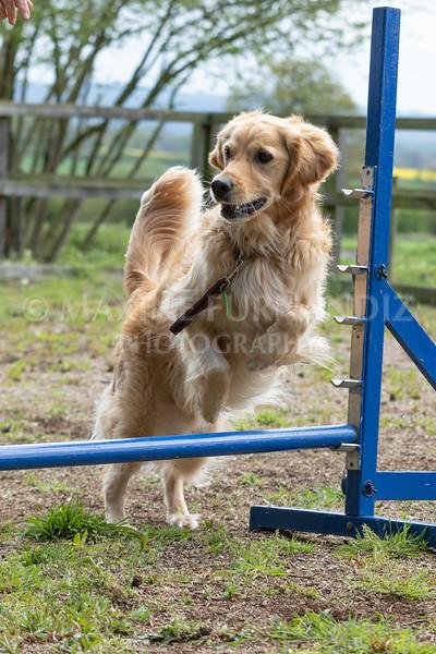 Dogs-7957.jpg