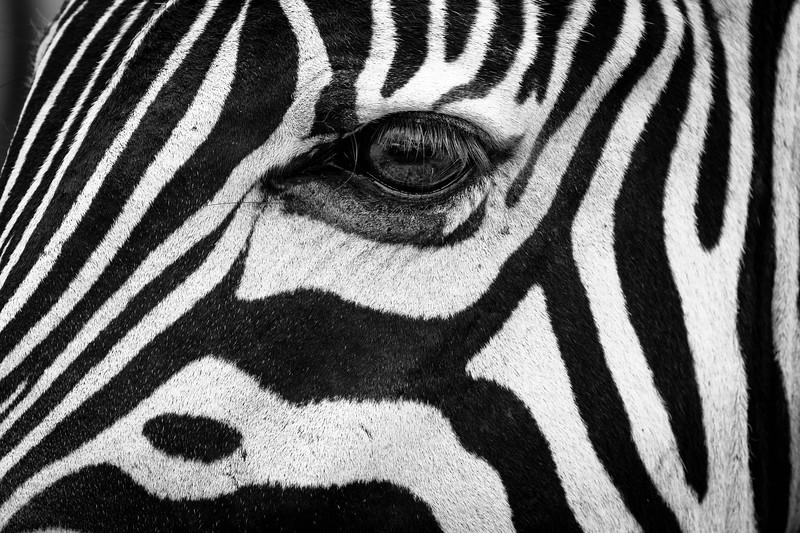 Zebra eye,  Etosha National Park