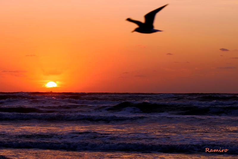 Sunrise Rockport 11-18-15 239.jpg