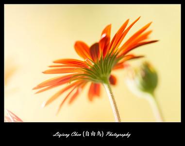 Unknown flower-25