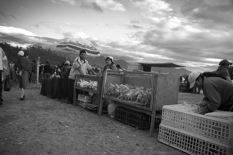 otavalo-animal-market_4881776289_o.jpg