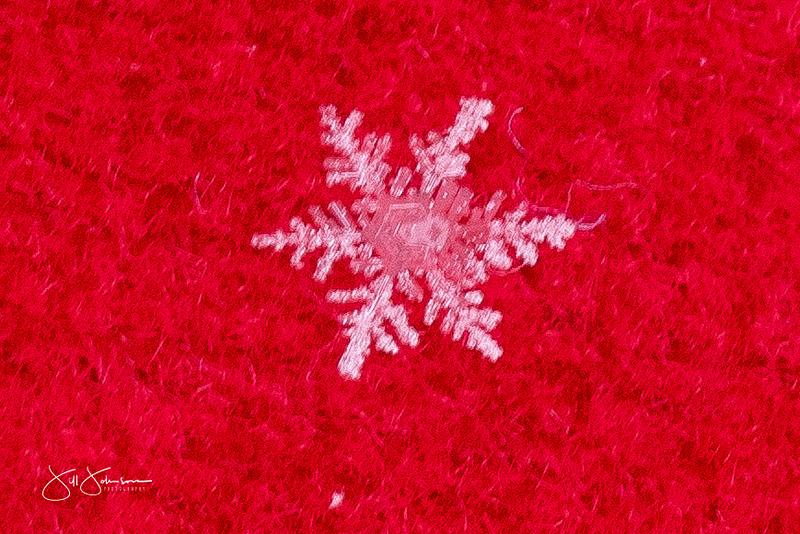snowflakes-2723.jpg
