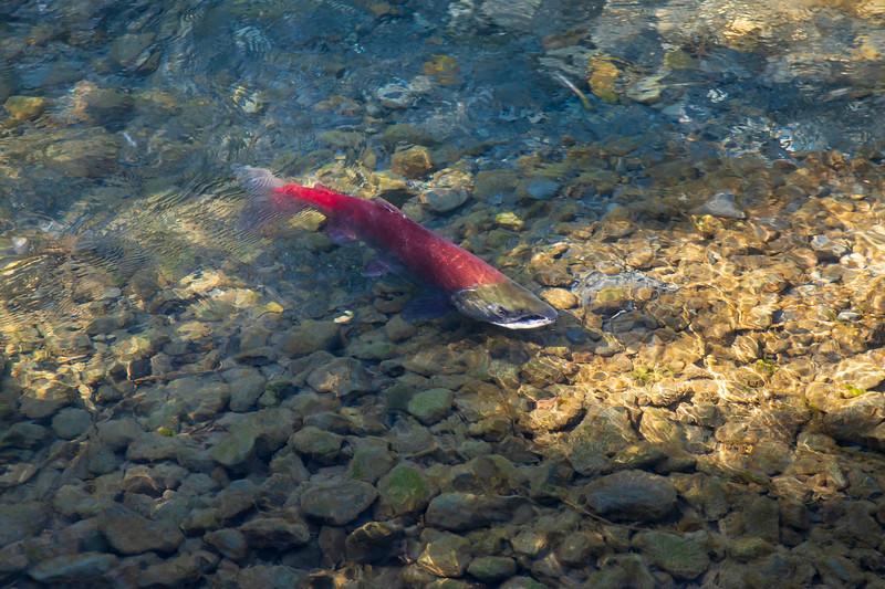 Williwaw Fish Viewing Platform