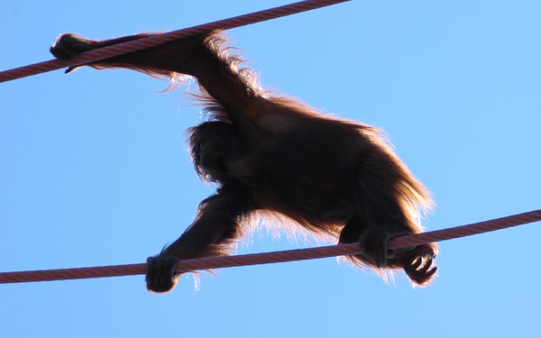 2006 - Nat'l Zoo