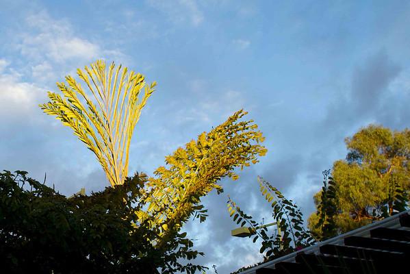 Sunrise backyard 11-16-2012
