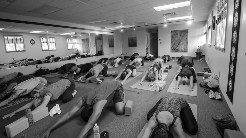DharmaDog Yoga Studio
