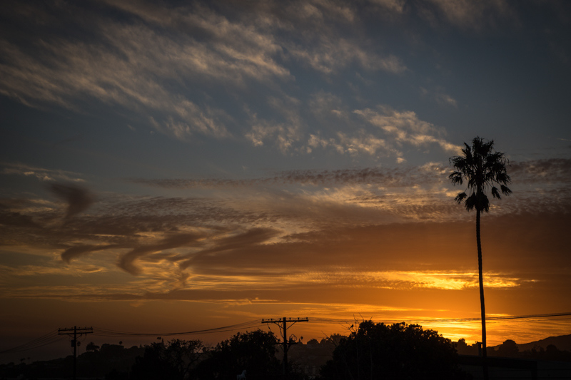 October 10 - Autumn sunset with palm tree.jpg