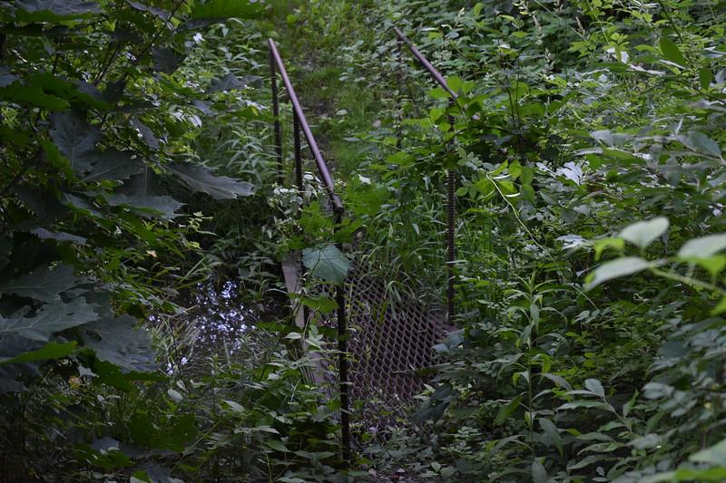 2019_06_26 CS Trail (63).JPG