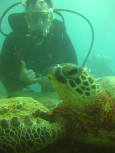 Turtle Reef Dive, Hawaii