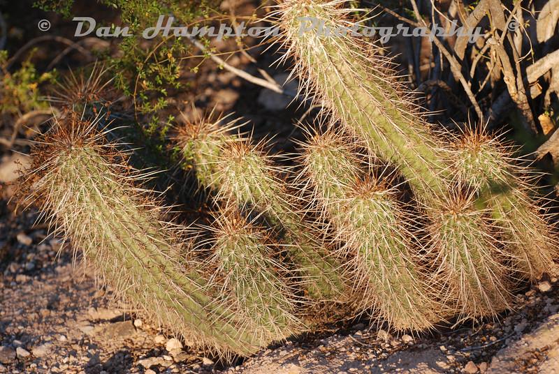 Desert Botanical_66.JPG