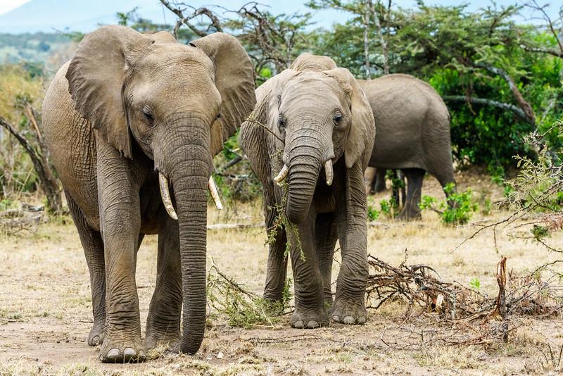 Kenya 2015-09139.jpg