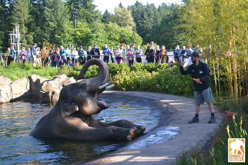 Anzelina-Coodey_Solstice-Run-Oregon-Zoo_022.jpg