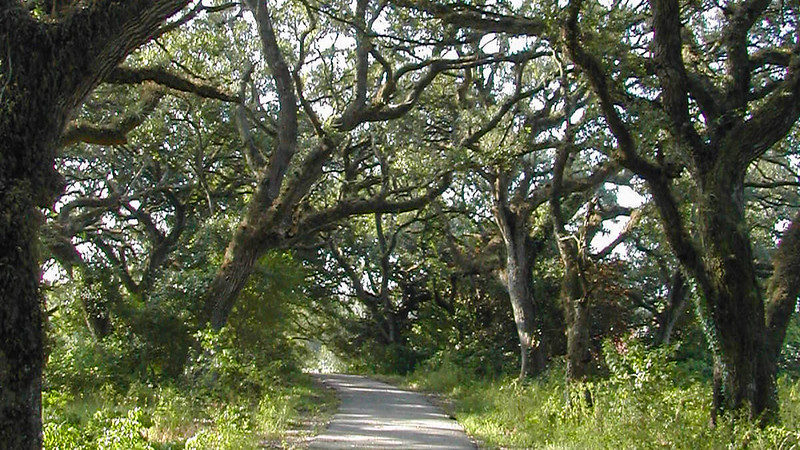 Pine Island Ridge Natural Area