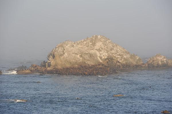 Simpson Reef Overlook - Charleston, OR