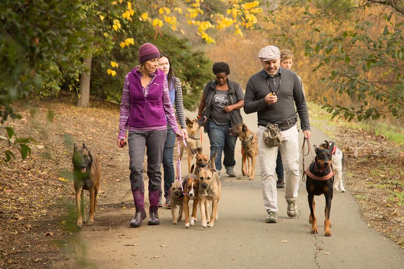 Dog Photos-Edited-82.jpg