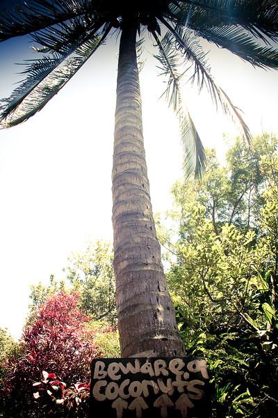 beware of coconuts.jpg