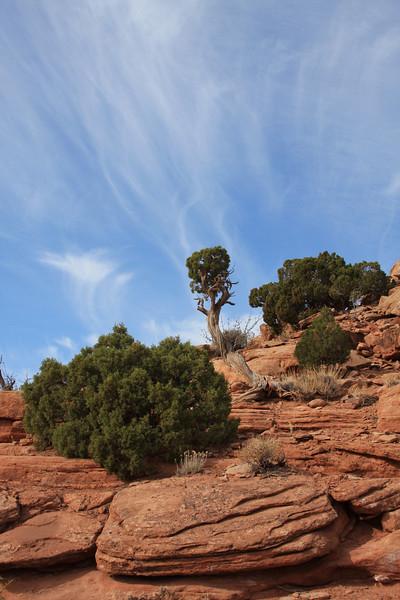 canyonlands (21).JPG