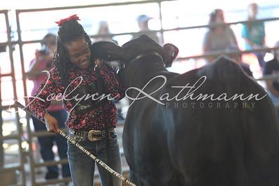 Open Cattle Ringshots 2