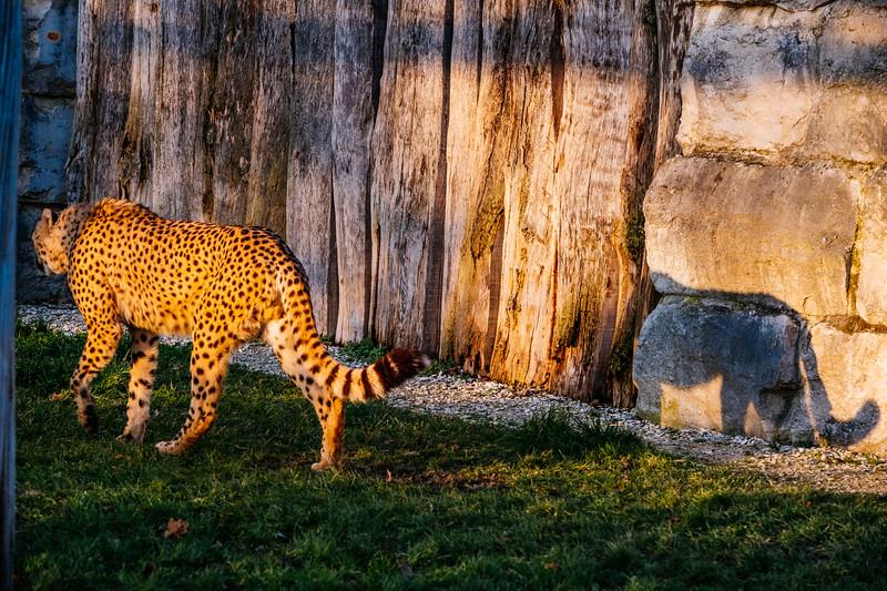 Tonis Zoo-0382.jpg