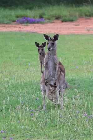 20110113 Australijski film drogi